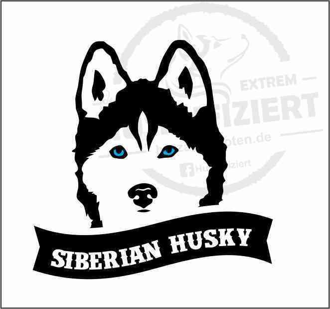 Siberian Husky Aufkleber Plott Blaue Augen